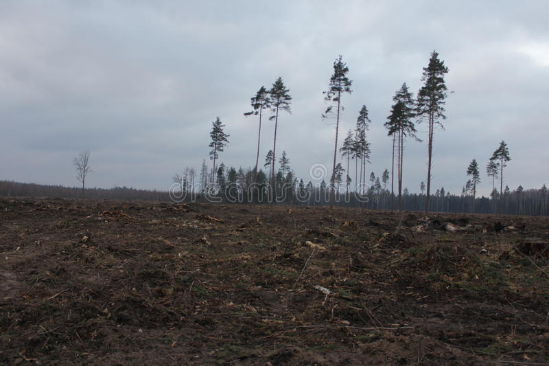 A floresta de morte fotos de stock