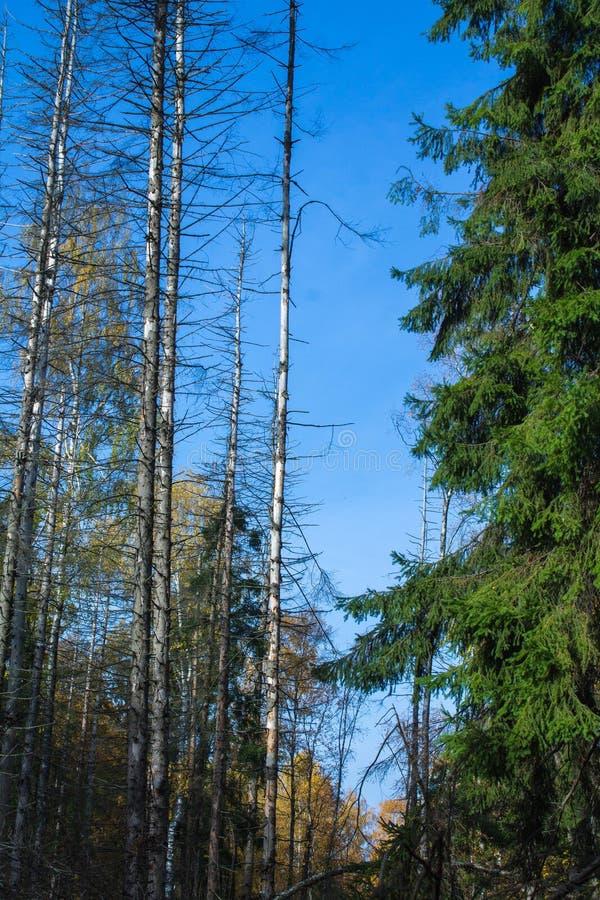 Floresta de morte foto de stock royalty free