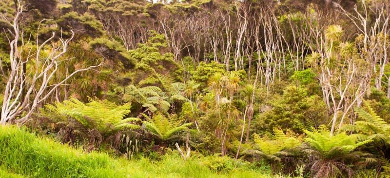 Floresta de Nova Zelândia de árvores da samambaia e de árvores do manuka foto de stock