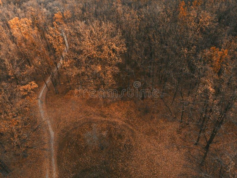 Floresta de novembro - vista de cima de imagem de stock