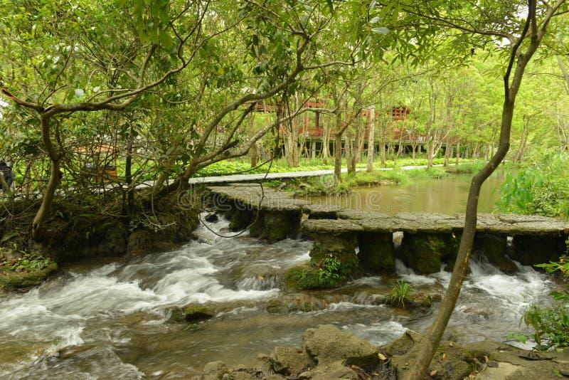 A floresta de Overwater na área cênico do Sete-furo pequeno imagens de stock royalty free