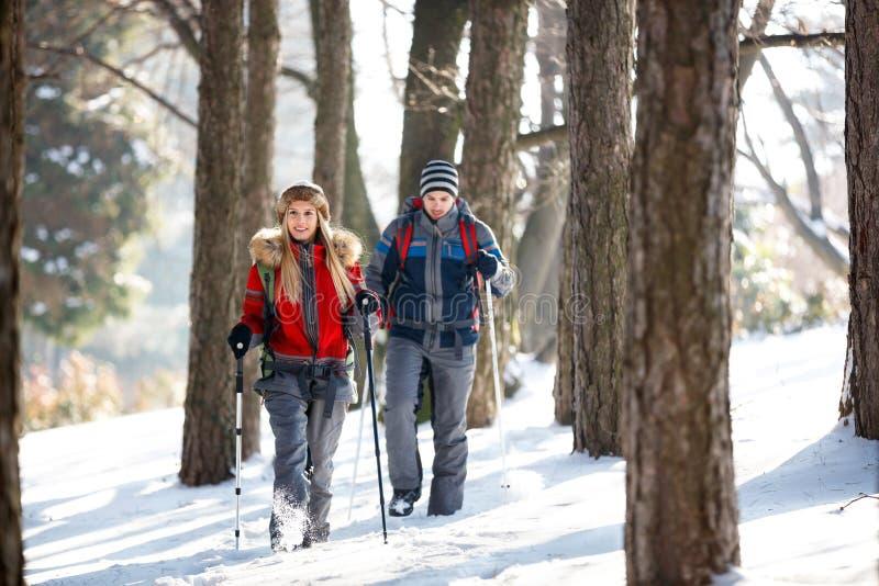 Floresta de passeio do lance dos caminhantes foto de stock royalty free