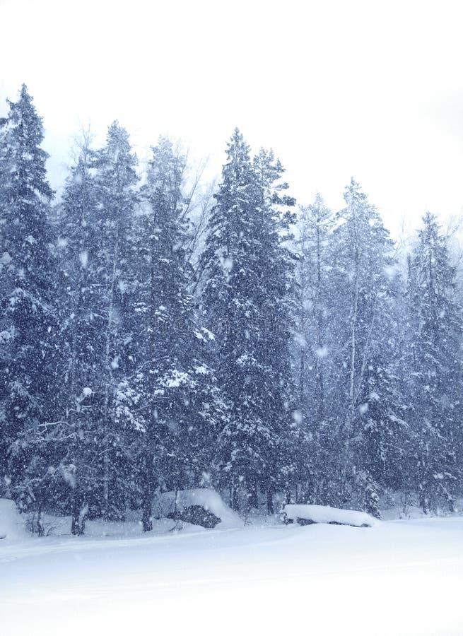 Floresta de queda da neve imagens de stock royalty free