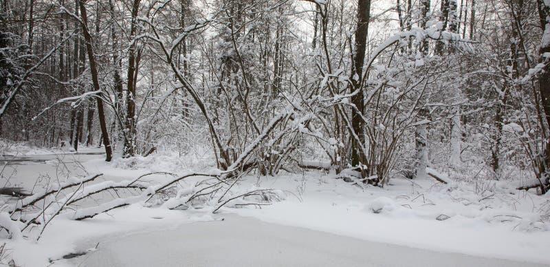 Floresta de riparian nevado sobre o rio em parte congelado imagens de stock