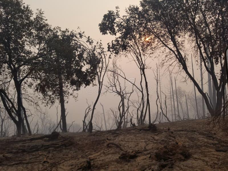 Floresta de Smokey foto de stock
