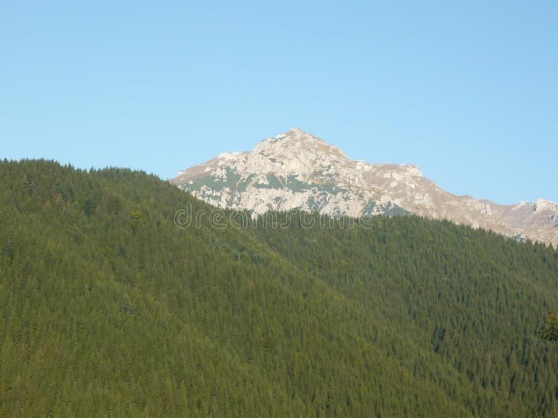 Floresta de surpresa com uma vista das montanhas fotos de stock royalty free