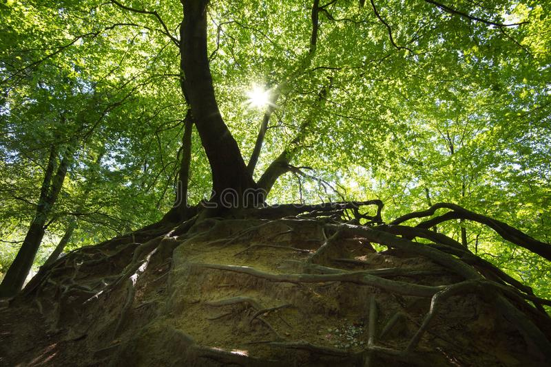 A floresta de Teutoburger em Westphalia em Alemanha fotos de stock royalty free