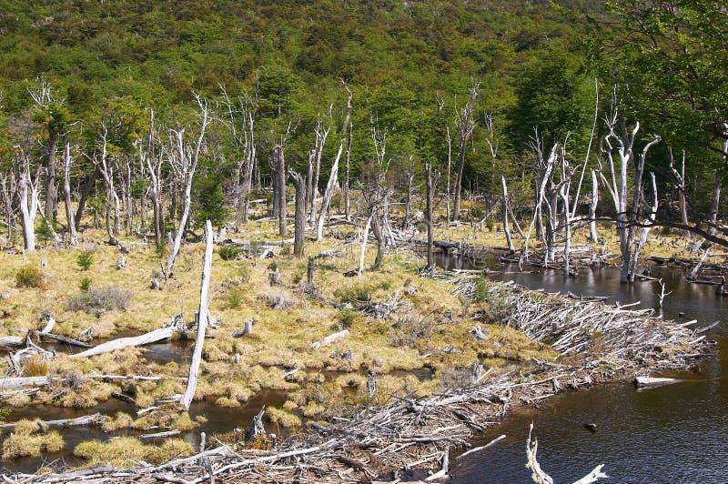 Floresta de Tierra del Fuego National Park Death fotos de stock royalty free