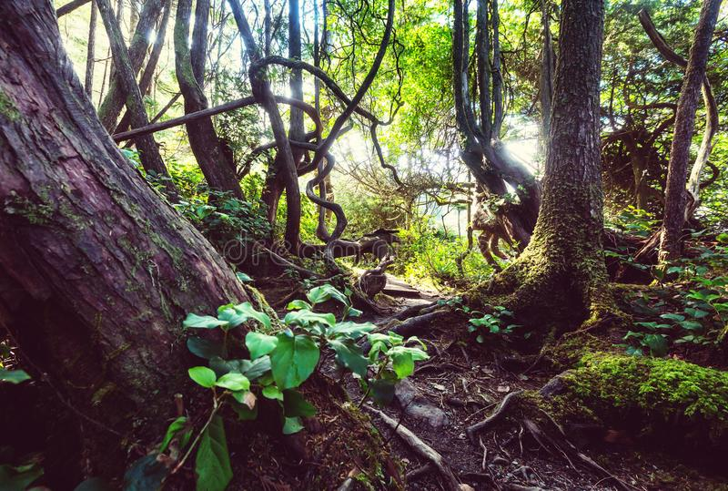 Floresta de Vancôver fotos de stock