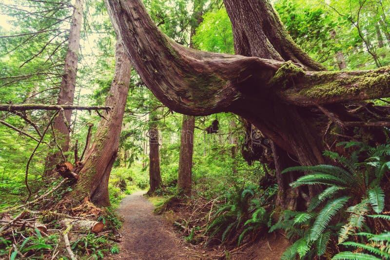 Floresta de Vancôver imagens de stock royalty free