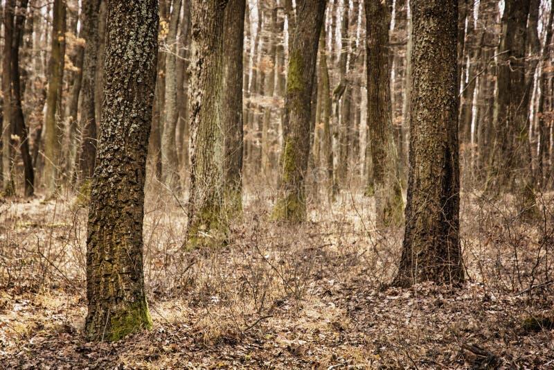 Floresta decíduo do outono, filtro marrom, natureza sazonal imagens de stock royalty free