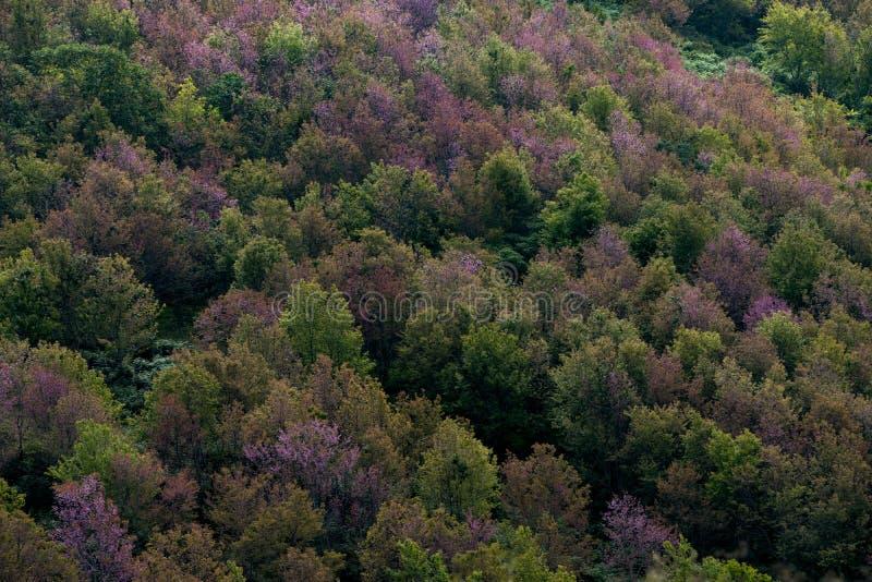 Floresta decíduo em cores do outono Mudança sazonal temperada para fotos de stock