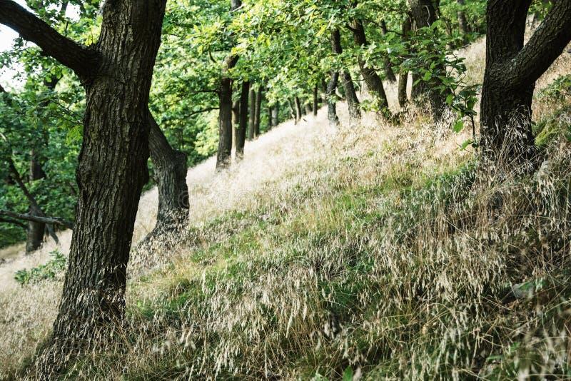 Floresta decíduo no verão, cena natural sazonal imagens de stock