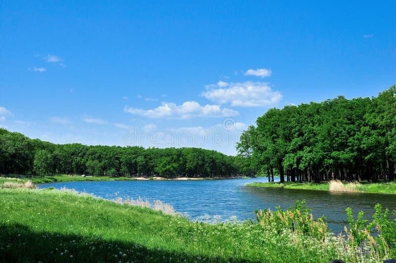 Floresta Deciduous e rio azul imagem de stock