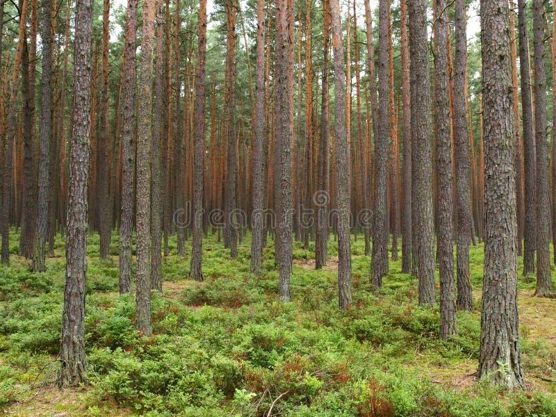 Floresta densa imagens de stock royalty free