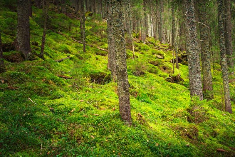 Floresta densa da montanha da paisagem fotografia de stock