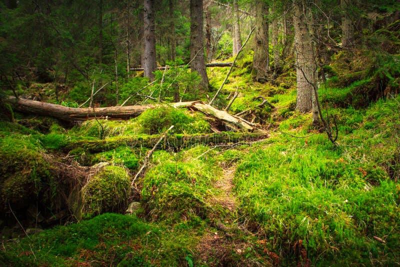 Floresta densa da montanha da paisagem imagens de stock