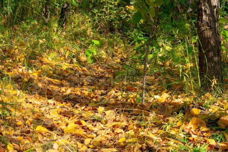Floresta densa do outono fotografia de stock royalty free