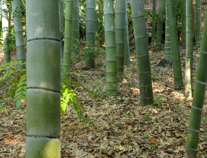 Floresta-detalhe de bambu fotos de stock