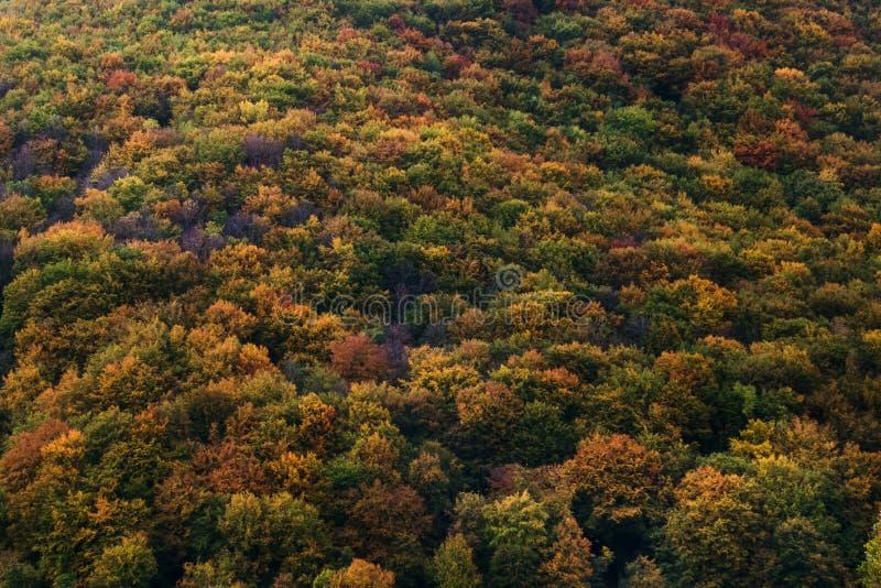 Floresta diferente do outono das cores imagens de stock