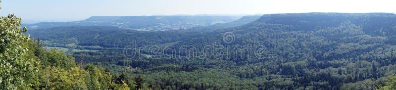 Floresta do abeto fotos de stock royalty free