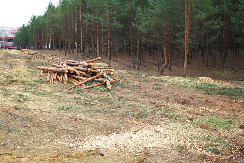Floresta do ambiente, da natureza e do desflorestamento - árvores do felling foto de stock royalty free