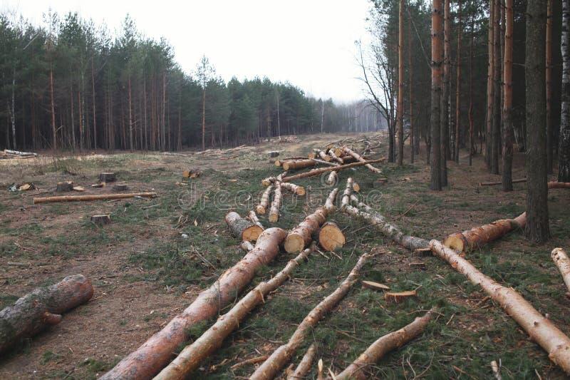 Floresta do ambiente, da natureza e do desflorestamento - felling das árvores fotografia de stock royalty free