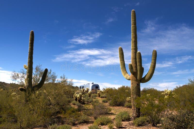 Floresta do cacto do Saguaro e acampamento da corrente de ar rv fotografia de stock royalty free