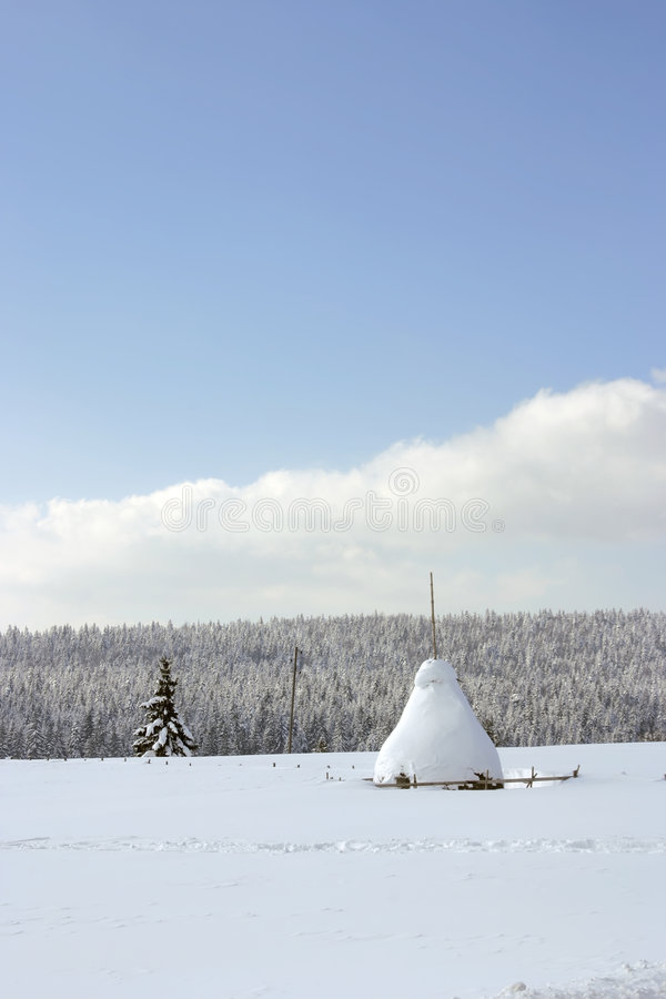 Floresta do campo de exploração agrícola do inverno imagens de stock