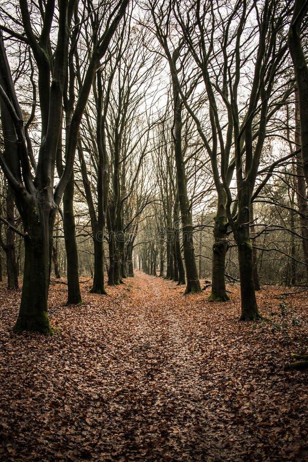 Floresta do conto de fadas fotografia de stock