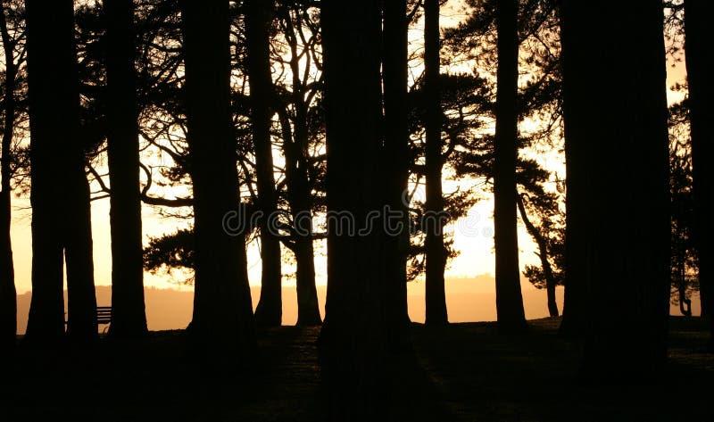 Floresta do decano Noite fotografia de stock royalty free