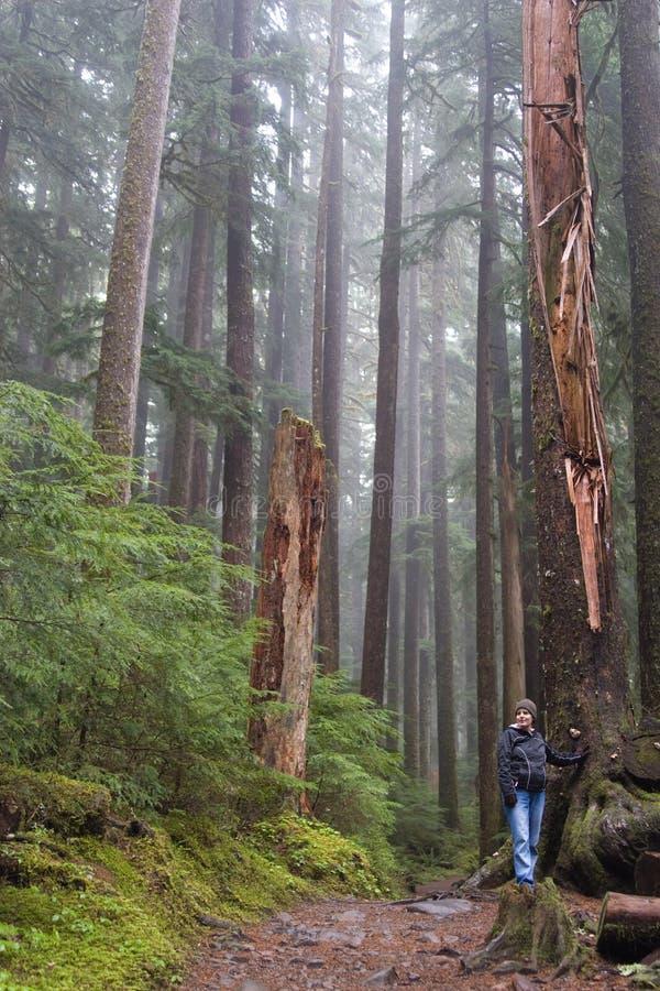 Floresta do estado de Washington foto de stock