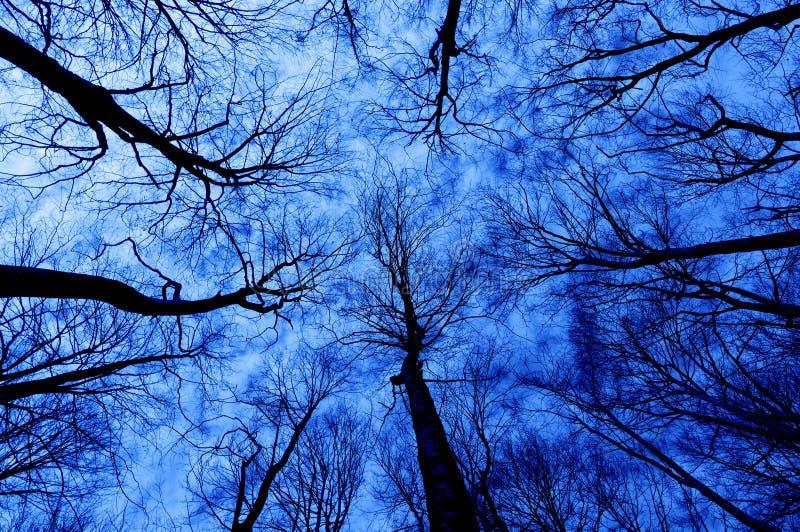 Floresta do horror na noite fotografia de stock