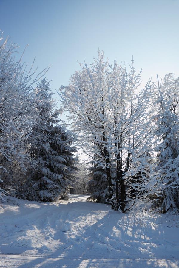 A floresta do inverno fotografia de stock royalty free