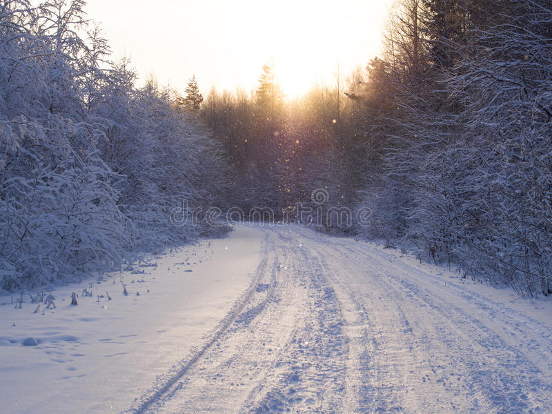 Floresta do inverno foto de stock