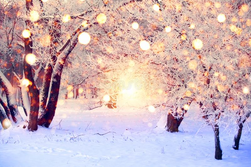 Floresta do inverno com flocos de neve coloridos Árvores cobertos de neve com luzes de Natal Fundo do país das maravilhas do Nata foto de stock royalty free