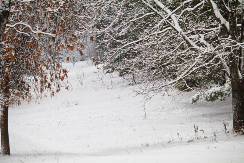 Floresta do inverno com neve nos ramos ar gelado no parque entre as árvores caminhadas acolhedores no inverno a neve das bordas d fotos de stock royalty free