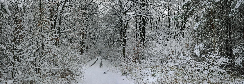 Floresta do inverno do conto de fadas fotografia de stock
