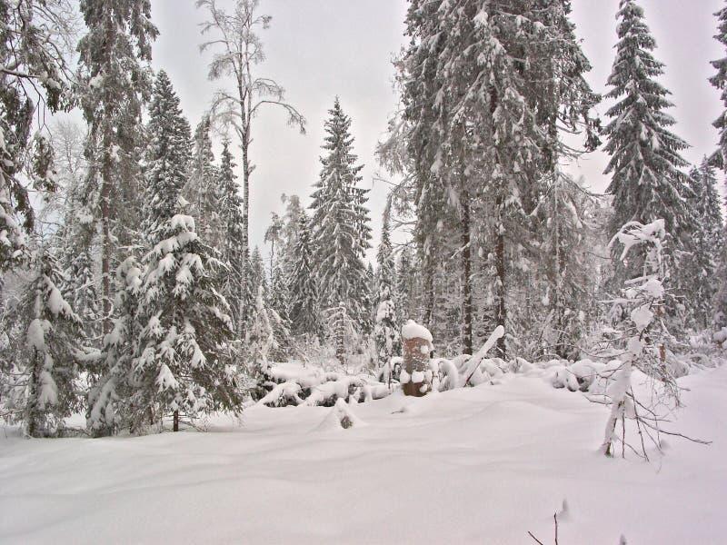 Floresta do inverno. Esclarecimento da neve fotografia de stock royalty free