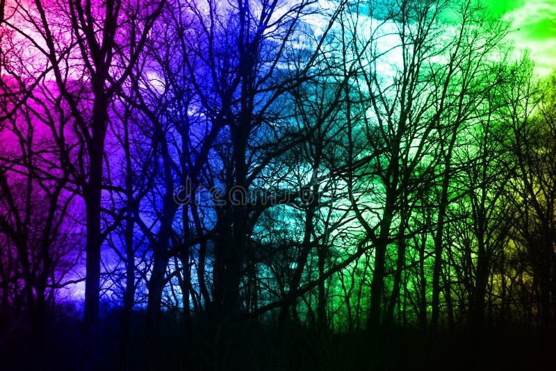 Floresta do inverno nas cores do céu e do sol fotos de stock