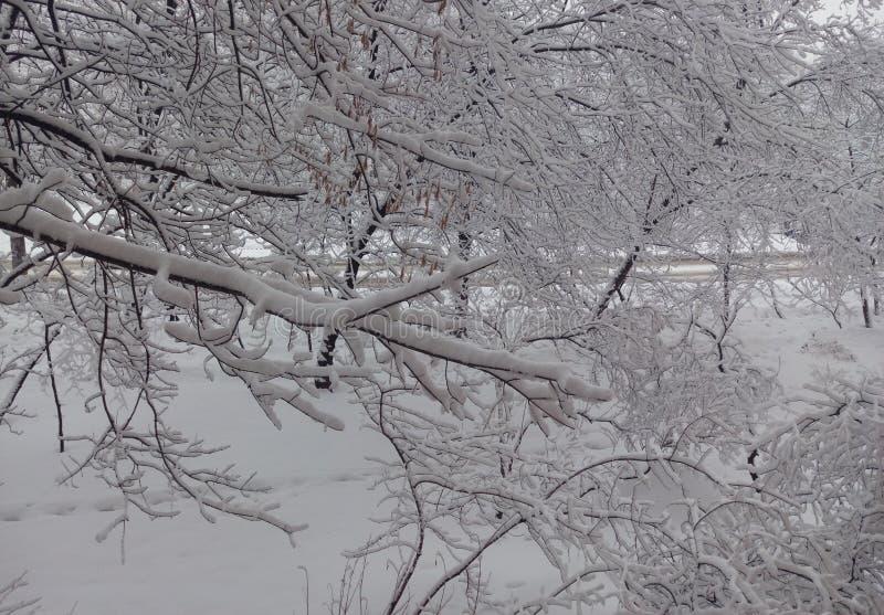 Floresta do inverno, neve branca, árvores na neve, geada, silêncio, paisagem nevado bonita fotografia de stock royalty free