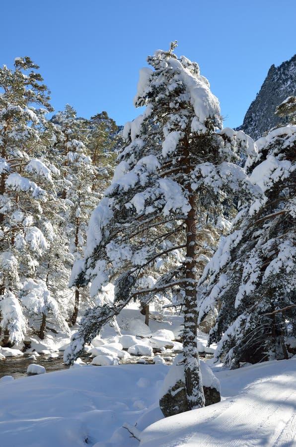 Floresta do inverno no vale de Marcadau fotos de stock royalty free