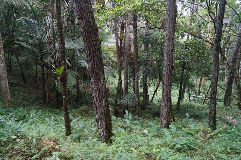 Floresta do jardim botânico de Puerto Plata fotos de stock royalty free