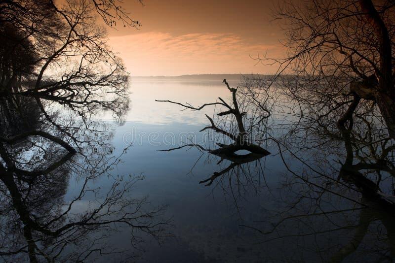 Floresta do lago fotografia de stock