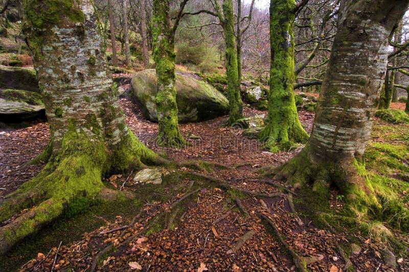 Floresta do Leprechaun imagens de stock royalty free