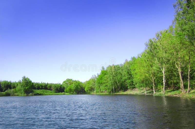 Floresta do nad do lago. fotos de stock