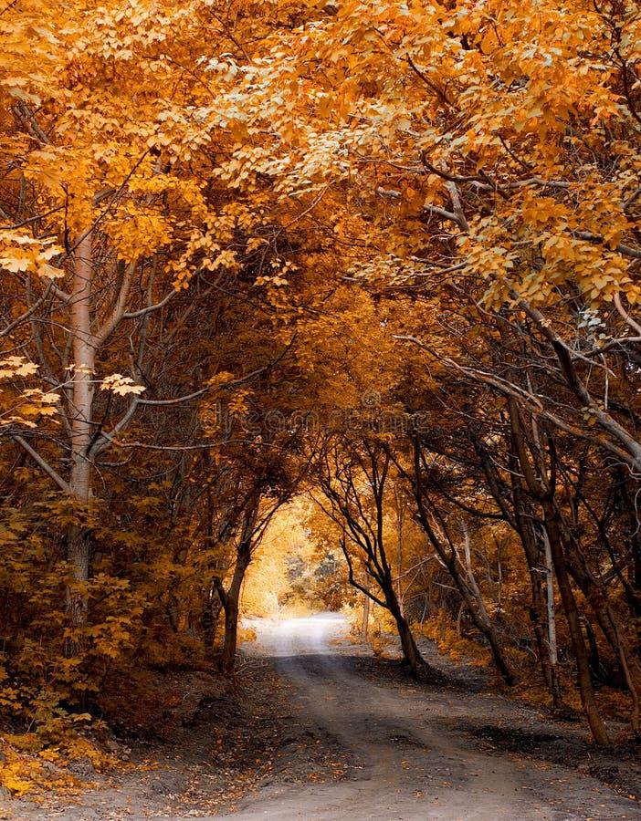 Floresta do outono. fotos de stock royalty free