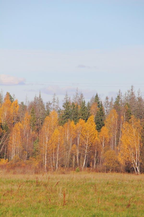 Floresta do outono. fotos de stock