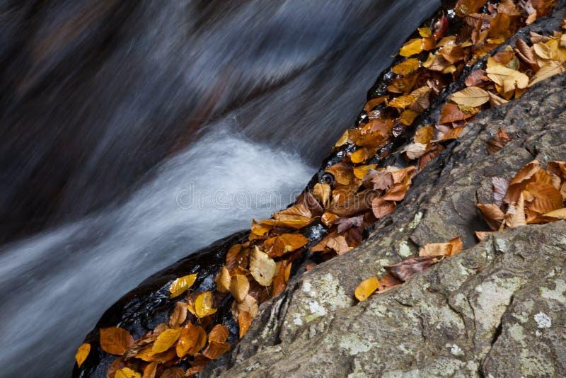 A floresta do outono balanç a angra fotos de stock
