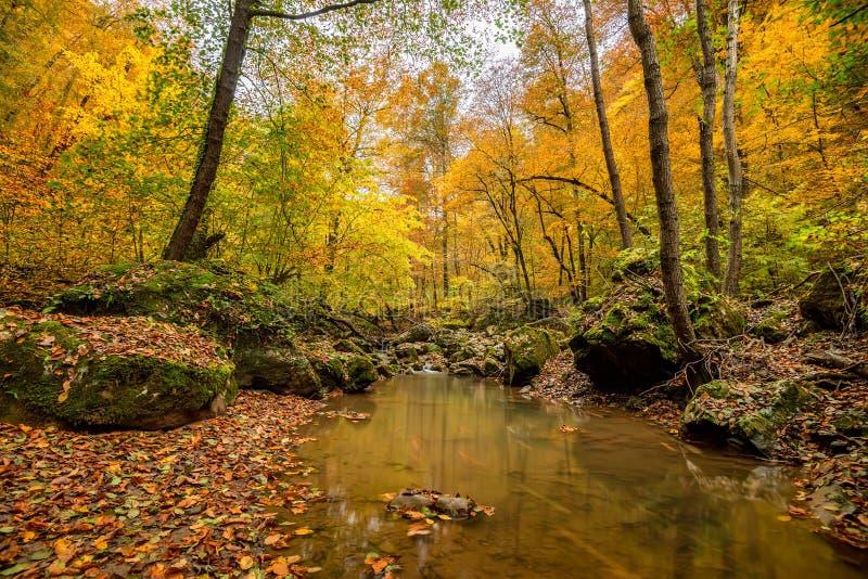 Floresta do outono com angra foto de stock royalty free